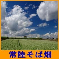 常陸そば畑(秋)