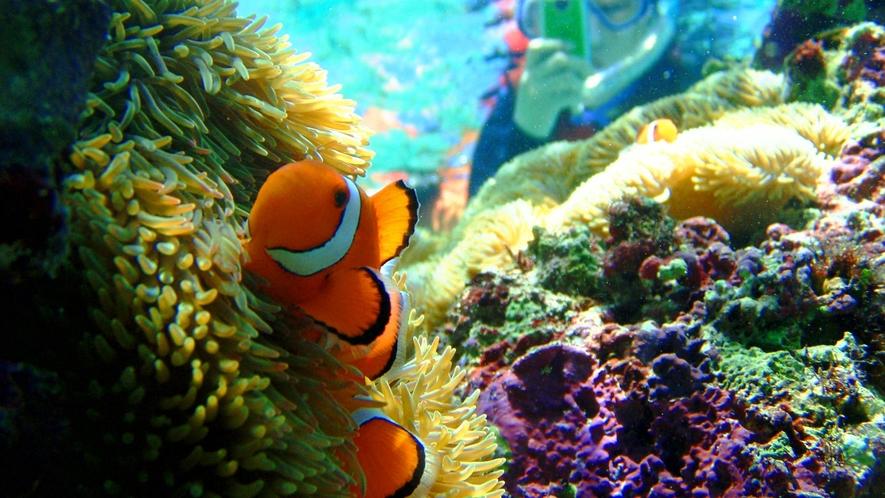 【アクティビティ】シュノーケリングでかわいいお魚と触れ合えます。