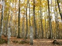 美人林の黄葉