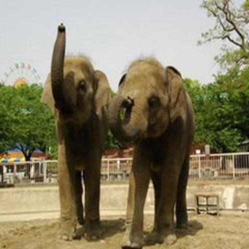 東山動植物園 ゾウ