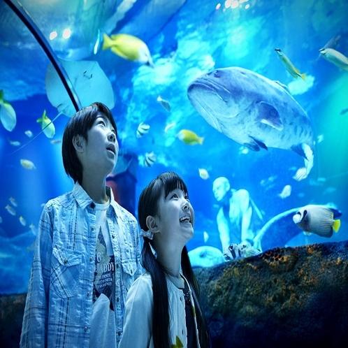 Sea Lifeイメージ