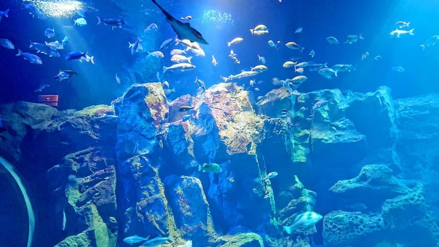 「GAO」大水槽水量800tの水槽には約40種2000匹もの生き物を展示しています。