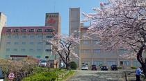 4月 桜外観02