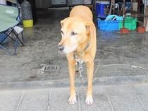 """【看板犬の""""bibi""""】家族と愛犬でみなさまをお迎えいたします♪心よりお待ちしております。"""
