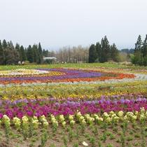 公園内に咲く季節の花★