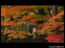 【龍洞院】紅葉の見頃は11月上旬頃(上田館からお車で20分)