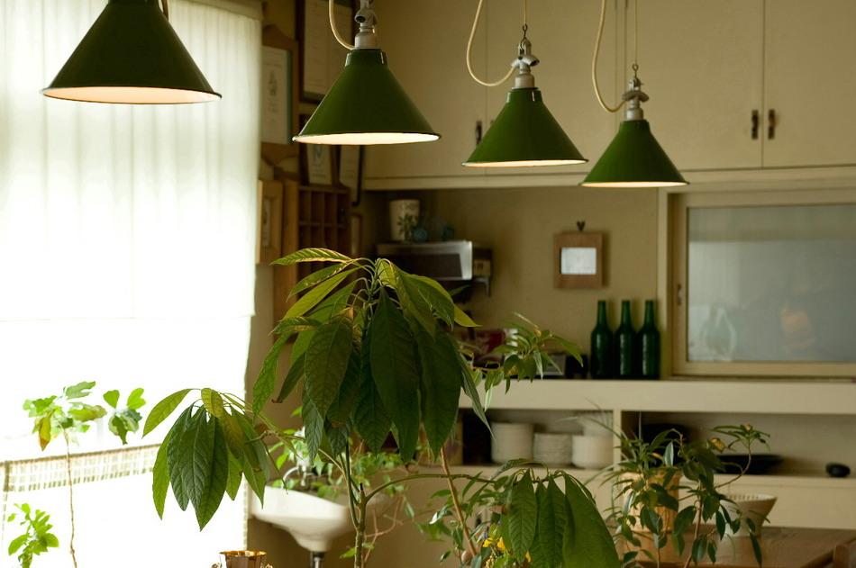 たっぷりの緑に囲まれてはいますが、ラウンジも緑の植物が目にやさしく映ります。