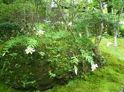 『箱根美術館(2)』大きな木に守られて美しいこの苔庭で《静かさ》に気がつきます