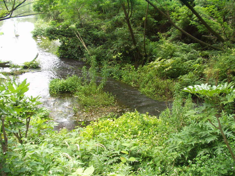 《柿田川》は富士山に降った雪や雨が地中にしみて、ここ《柿田川湧水群》で湧く湧き水だけの川