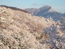 夜、雪が降っていて朝には晴れ上がると、こんな景色が窓の外に広がります。
