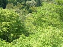 目の前の谷の新緑