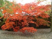 『箱根美術館③』」秋の紅葉はテレビで中継もされるほどです。ケーブルカー「公園かみ」下車