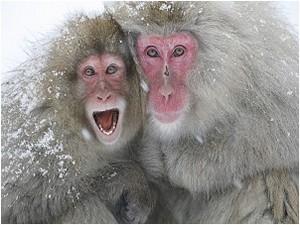 地獄谷野猿公園(スノーモンキー)