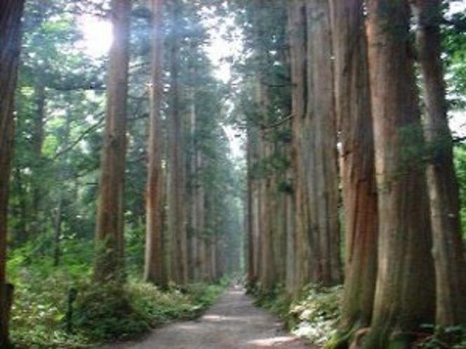 戸隠奥社への参道