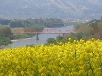 北信濃菜の花