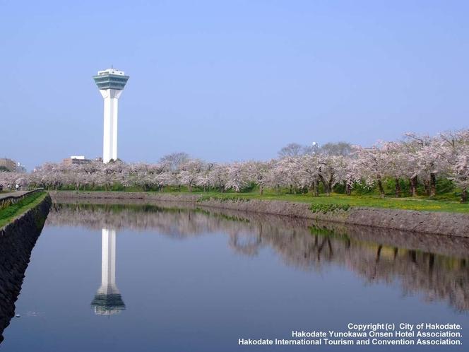 五稜郭タワー夏イメージ
