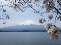 2015.4.16桜&富士山