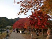 紅葉祭り③