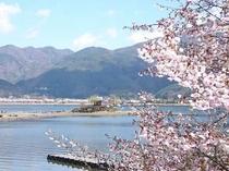 2017.4.23桜