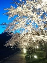 2017.4.22夜桜