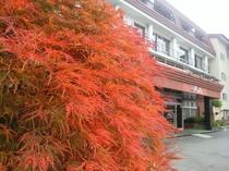 2015.10.31紅葉