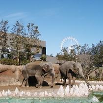 いとうづの森動物園