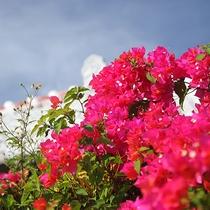 色鮮やかなお花