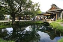 忍野八海の一つ涌池(世界文化遺産)