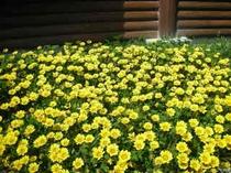 春の花 パート2