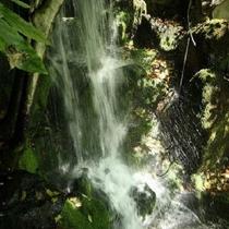 日本庭園の滝
