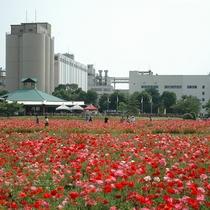 キリンビール 福岡工場(5月頃)