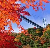 秋の竜神大吊橋