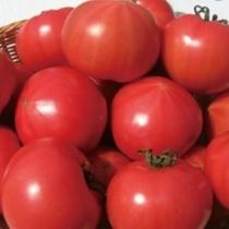 トマトファーム/トマトジュースは異次元の旨さです