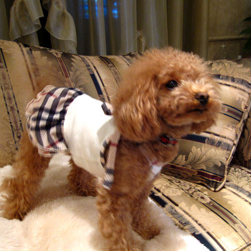 Doggies Toy Poodle