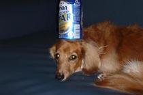看板犬の小梅、可愛い芸をします リクエストしてみて!