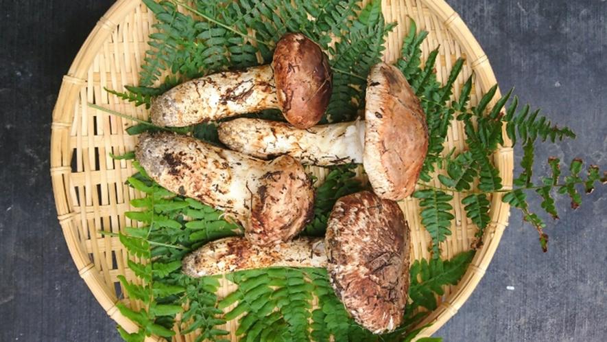【夕食一例】地産の松茸をご用意しております。