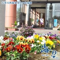 玄関を彩る花