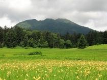 ニッコウキスゲと燧ケ岳