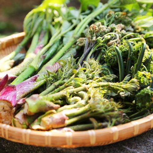 豊かな山の恵み 山菜