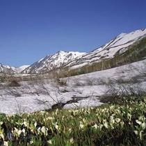 春の白馬山麓