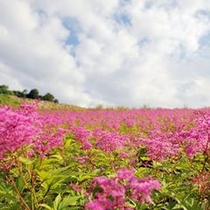 白馬山麓で見られる花々