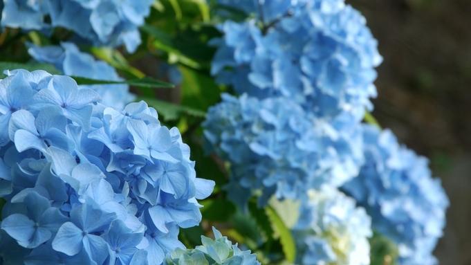 【紫陽花が見頃のフラワーガーデン×ランプミュージアム入園券付き】家族でお出かけ♪自然をたっぷり堪能