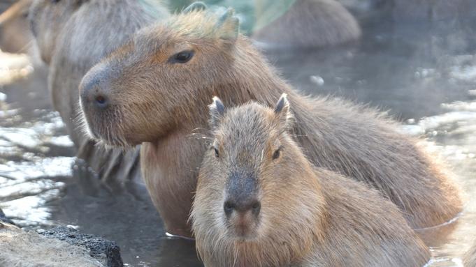 【シャボテン公園チケット付】130種類以上の動物に会える!アニマルショーが人気