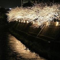 松川ライトアップ