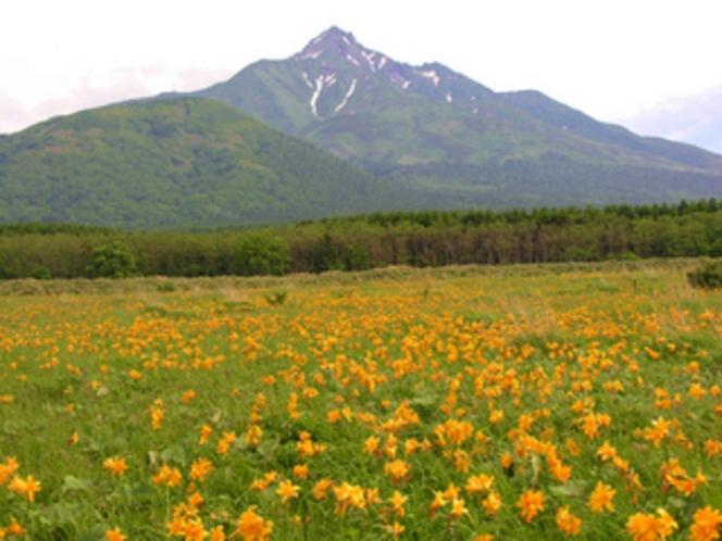 エゾカンゾウと利尻山