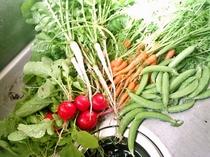 少しですが、野菜を育ててます。旅行中は不足がちなお野菜。新鮮なお野菜はサラダで!