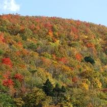 *客室から眺める紅葉/秋には周りの山々が美しく色付きます。
