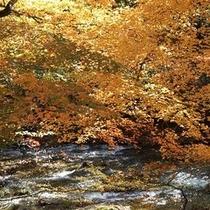 施設周辺/秋・鴬宿川の紅葉風景