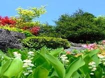 玄関横の庭園