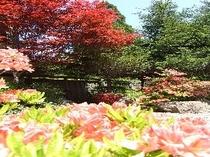 玄関横の庭園風景